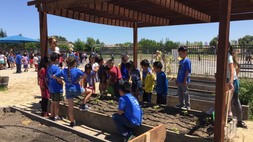 Arlene Hein School students busy tending their class garden.