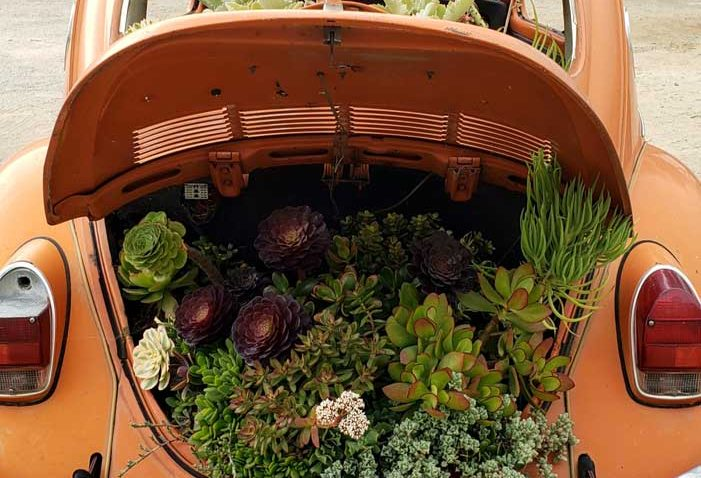 Orange VW bug filled with succulents