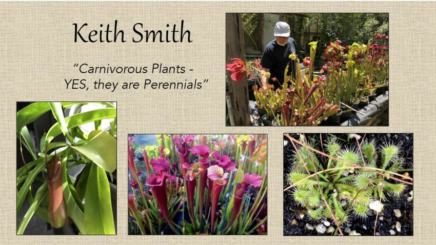 Keith Smith - Carnivorous Plants - YES, they are Perennials