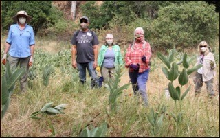 Monarch Butterfly Habitat Restoration Project Team 2020